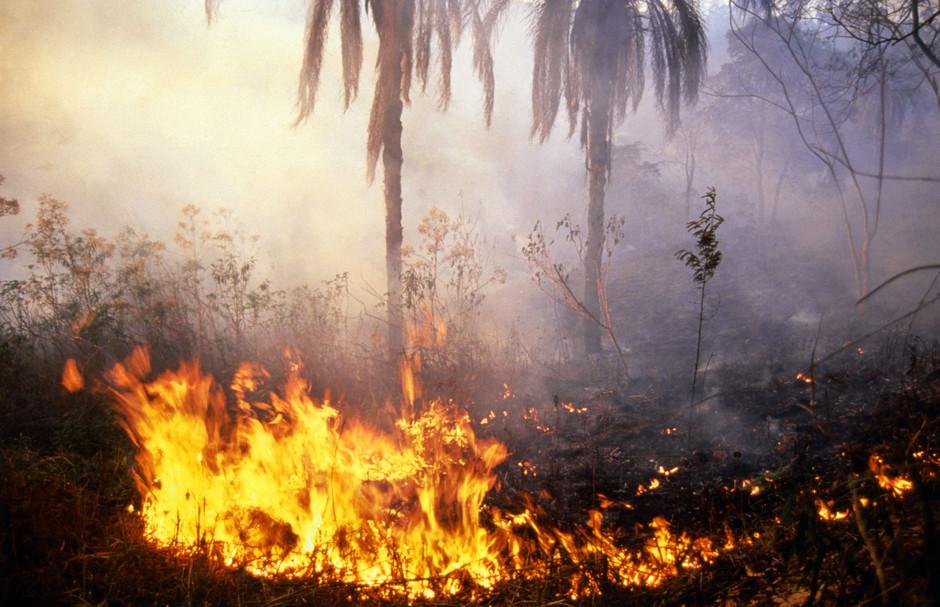 La selva amazónica en llamas el pasado mes de julio